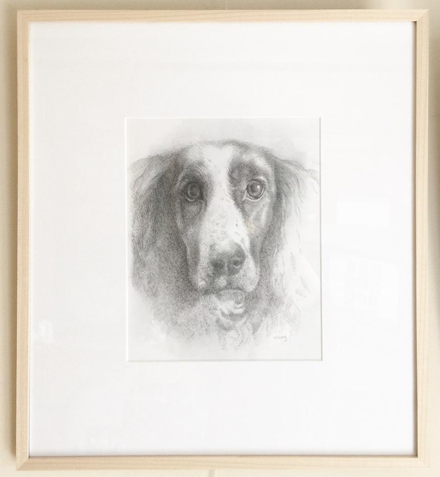 Sophie Ploeg spaniel drawing
